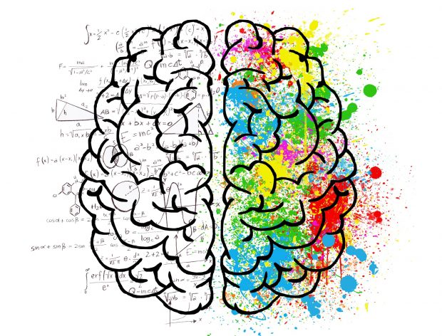 The human brain displaying the right and left sides and their differences
