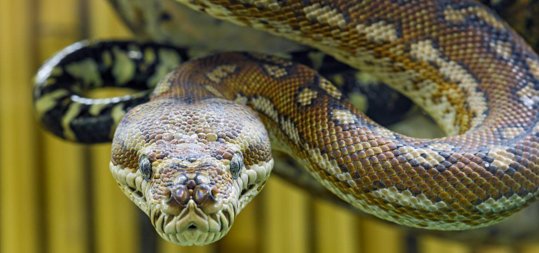 de-esser snake
